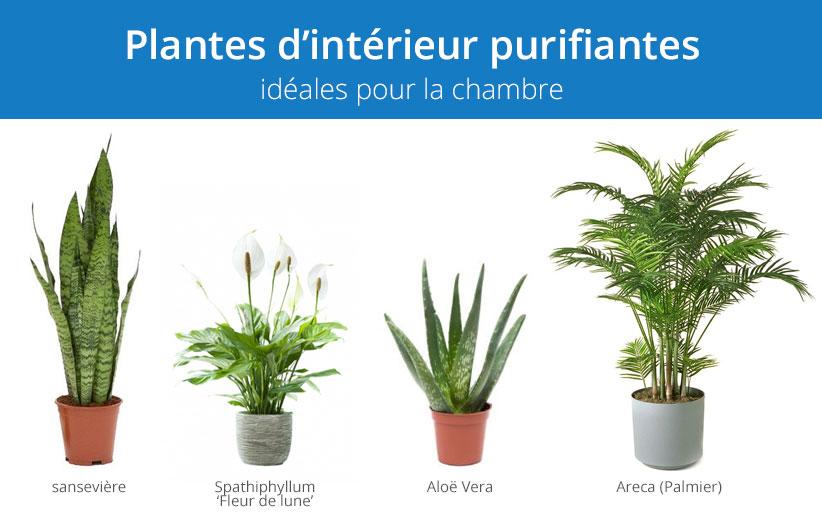 Plantes d'intérieur purifiantes