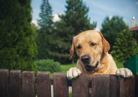 Demande de devis cl tures chez bia construction solvari - Cloture jardin chien dijon ...