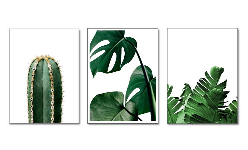 Populaire planten voor aan je wand