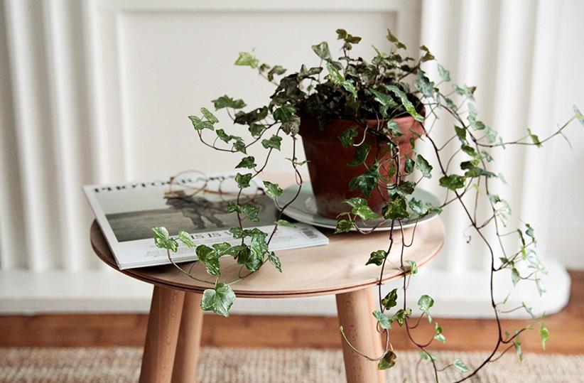 De beste luchtzuiverende planten voor thuis solvari